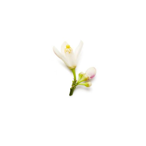 Armani Armani Code Women Eau de Parfum 75ml